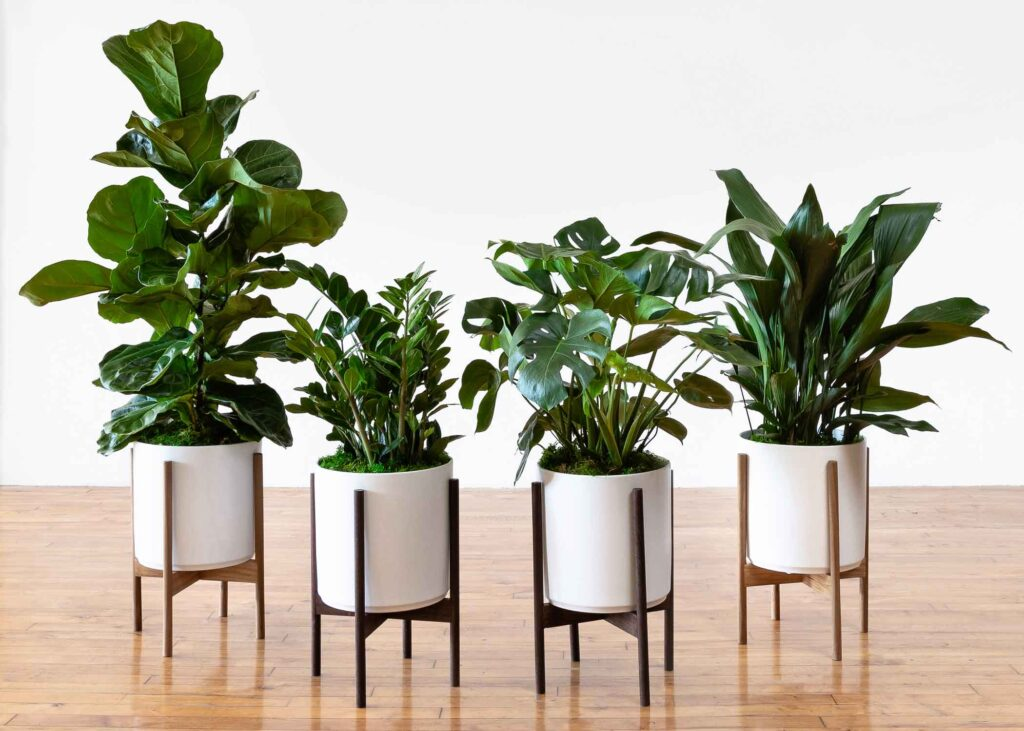 four plants by Leon & George